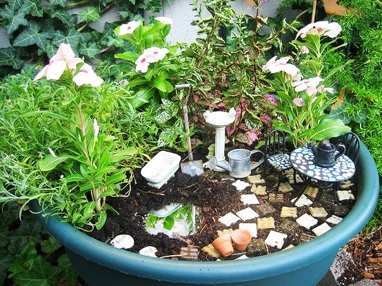 Droll's garden