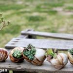 Мини градина в черупка от охлюв